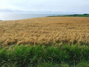 Southern-Tour_Wheat